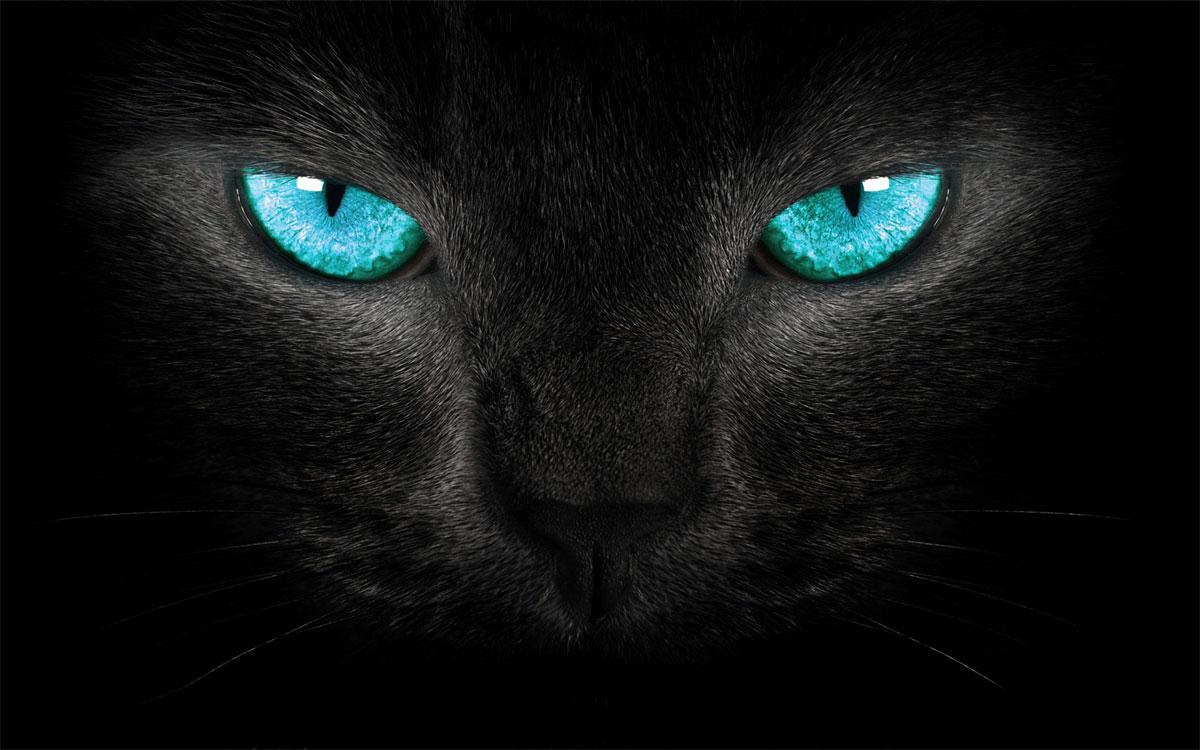 bg-cat-eyes